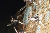 AGENDA: 23 de agosto a 6 de septiembre, en Plaza de la O, 'Atardecer Pamplona' en Festival de las Murallas