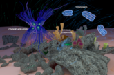 Los primeros seres unicelulares ya tenían el mecanismo para formar órganos