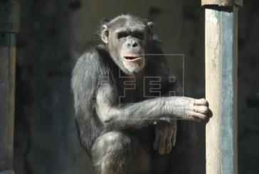 Un fémur de hace 30 millones de años desvela la separación de los hominoideos y los monos