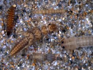 Javier Oscoz charlará sobre los macroinvertebrados de los ríos de Pamplona en el Museo de Educación Ambiental