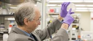 Crean un cromosoma de diseño que supone un gran paso hacia la vida artificial
