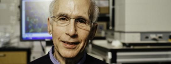 Descubren en la Universidad de Harvard una proteína que rejuvenece músculos y cerebro