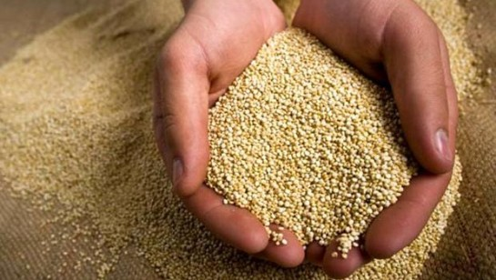 La quinua es el alimento de moda en EE.UU. y apunta a ser la solución al hambre en el mundo