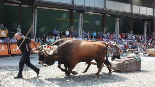 Dos bueyes mueren por dopaje en Vizcaya