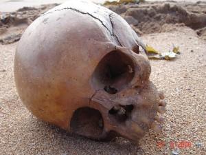 El cráneo fue hallado hace seis años en la misma playa. El cráneo fue hallado hace seis años en la misma playa.
