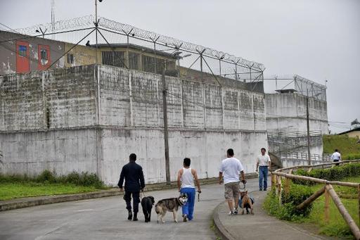 Ladridos contra el estrés: terapia canina en cárceles de Ecuador