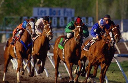 La Policía detiene a una pareja que ofertaba caballos de carreras de pura raza inexistentes por Internet