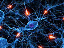 Tus neuronas también necesitan dormir