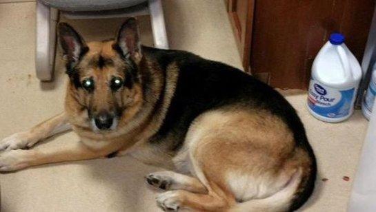 Una mujer pide en su testamento que eutanasien a su perra y que la entierren junto a ella
