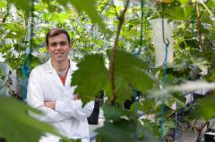 Una tesis en la UN constata que el aumento de temperatura y de CO2 acelera la maduración de las uvas