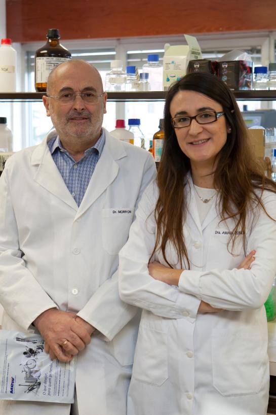 El Instituto de Salud Tropical de la Universidad de Navarra descubre una vía para mejorar las vacunas contra la brucelosis