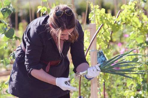 El empleo agrario recibirá más de 216 millones de euros para este año