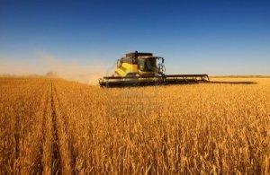 Una moderna cosechadora de trabajo de campo trigo. DR