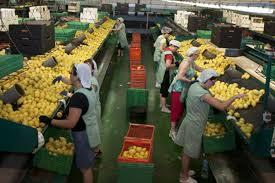 El Gobierno de Navarra diseña un marco estratégico de apoyo a las cooperativas agroalimentarias hasta 2020