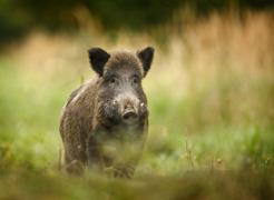 Desciende un 8% el número de accidentes de tráfico por atropello de animales en Navarra