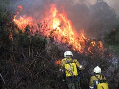 Se prohíbe el uso de fuego en zonas del norte de Navarra por riesgo de incendios forestales