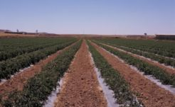 El Gobierno de Navarra abona 26,8 millones de euros de ayudas de la PAC