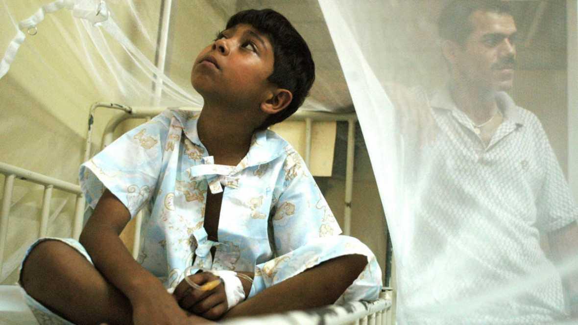 Crean una vacuna experimental contra el dengue eficaz al 100%