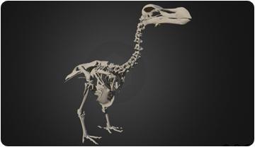 Primer atlas tridimensional del extinto dodo