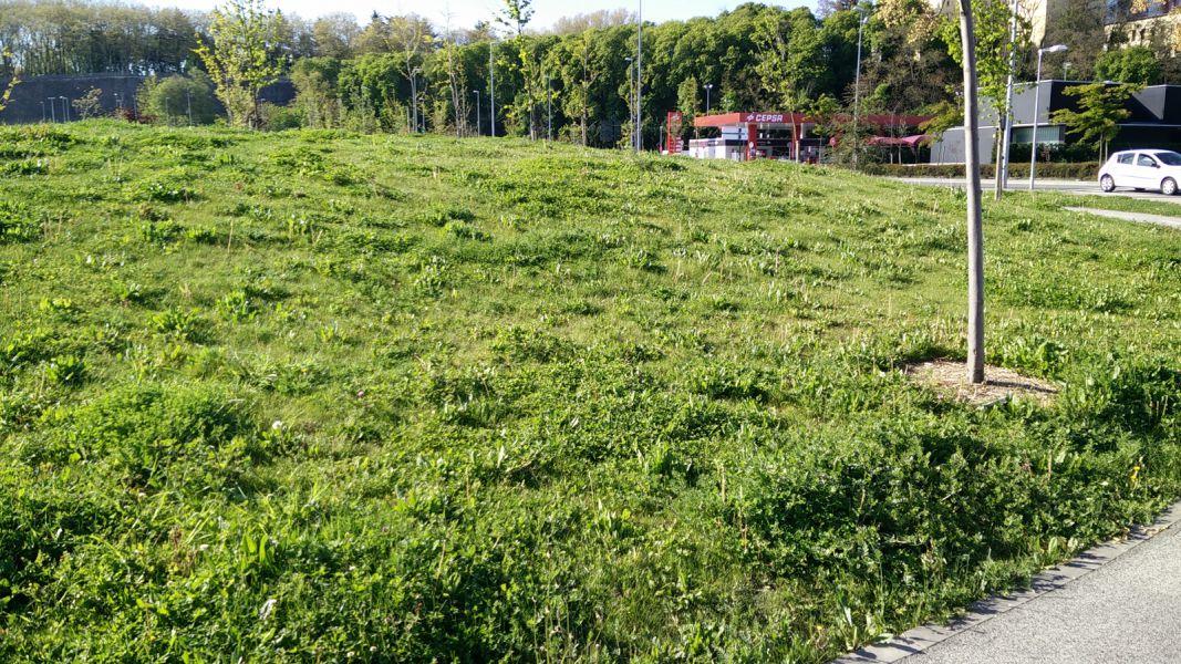 UPN exige mejorar el mantenimiento de las zonas verdes de Pamplona