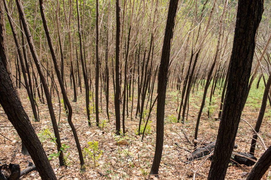 El invierno de 2016 ha sido el de menos incendios y superficie quemada de la última década en Navarra