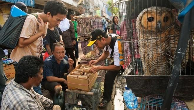 El comercio ilegal de especies silvestres genera 27.000 millones de euros al año