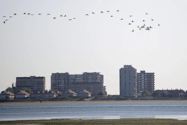 Restaurar las marismas contrarresta el efecto del aumento del nivel del mar