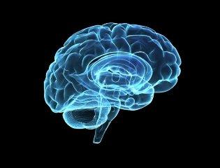 Descubren una nueva región del cerebro que podría vincularse a los movimientos finos