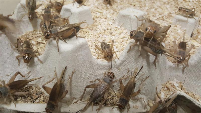 Insectos, la dieta ideal para animales y ¿humanos?