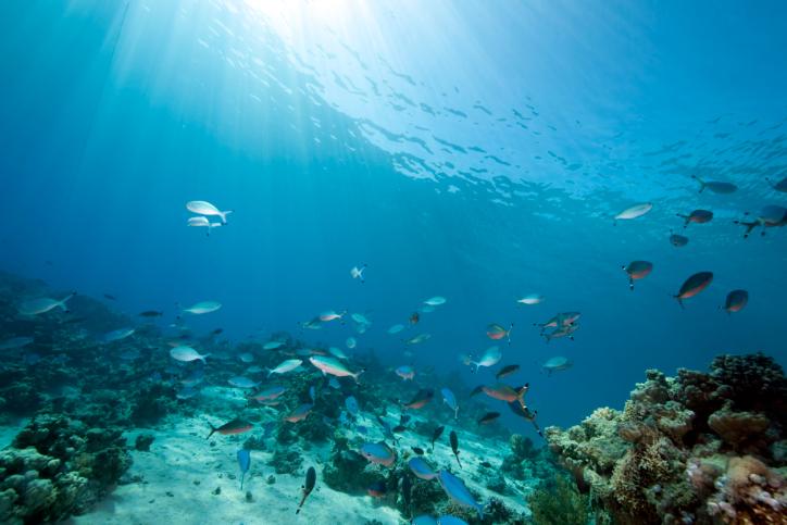 Los robots marinos y la captura del ADN son el futuro de exploración oceánica