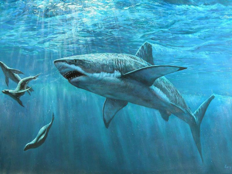 Los mayores tiburones de la Tierra dominaron Canarias hace 5 millones de años