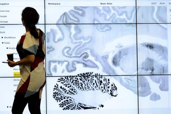 Un estudio revela que una parte del cerebro sigue creciendo durante la edad adulta