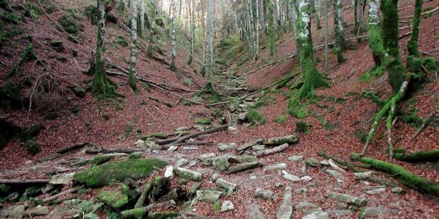 Convocadas ayudas por 450.000 euros para inversiones en tecnología, transformación y comercialización de productos forestales