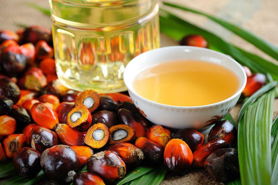Aceite de palma: La grasa oculta más consumida y perjudicial