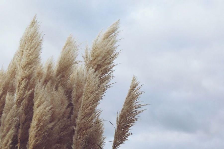Alerta de viento entre 65 y 75 km/h en Pamplona para mañana