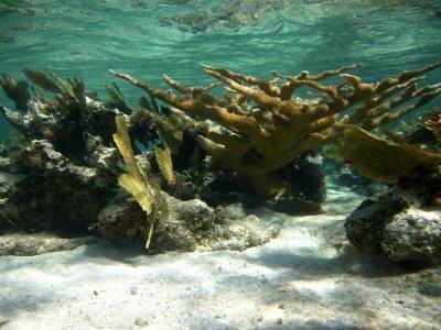 Los corales caribeños poseen activos contra el VIH
