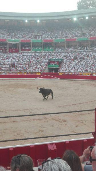 AGENDA: de 29 febrero a 15 marzo, en Pamplona, visitas guiadas Plaza de Toros