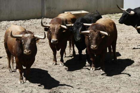 Cuatro corridas de toros esperan ya el Chupinazo 2017 en los corrales del Gas