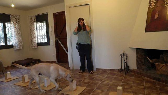 El Hospital Clínico entrena a un perro para la detección precoz del cáncer de pulmón
