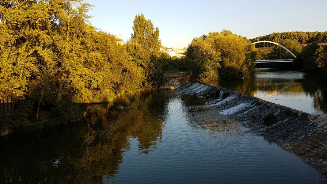 Retirados árboles del cauce del río Arga
