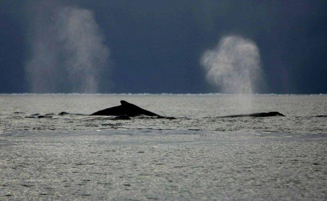El calentamiento global perjudicará al 79% de las especies del océano austral