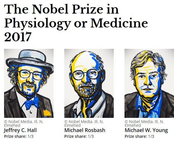 Tres estadounidenses ganan el Nobel de Medicina por sus estudios sobre el reloj biológico
