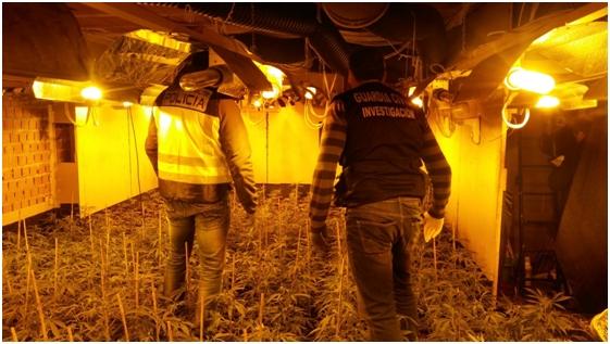 Desarticulada una organización china de producción y venta de marihuana