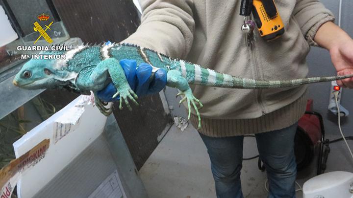 La Guardia Civil desmantela una organización dedicada al tráfico ilegal de reptiles