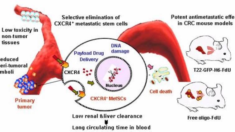 Probado con éxito un nanofármaco contra las metástasis