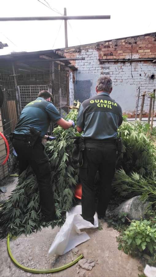 Un detenido y una plantación de droga desmantelada por la Guardia Civil de Navarra