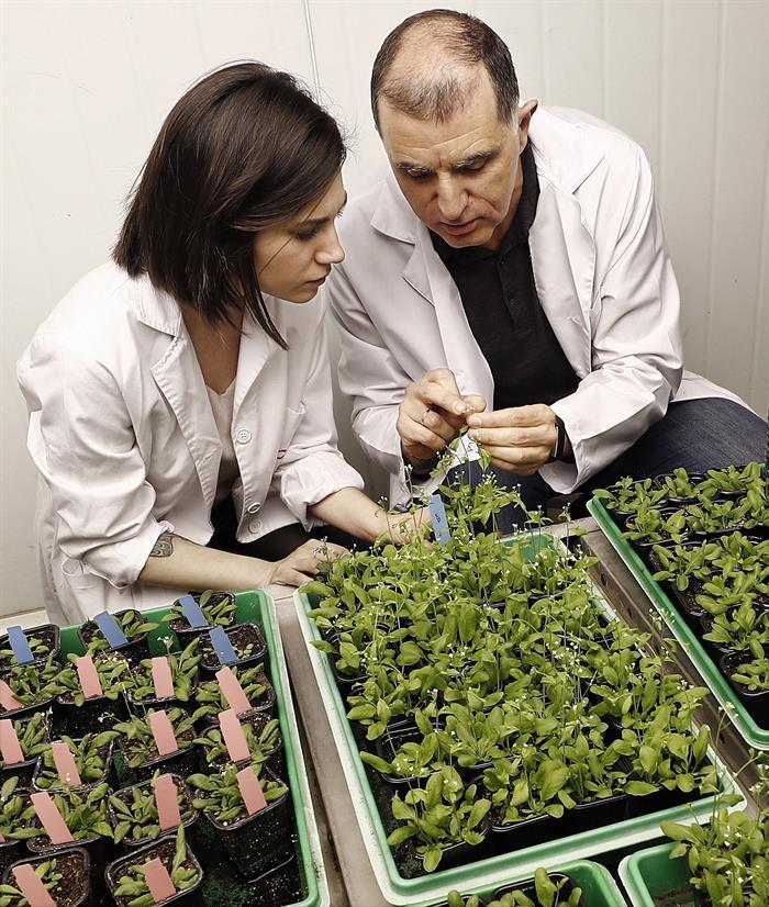 Estudiantes de Navarra investigan con la ayuda del CSIC cómo llevar la agricultura a Marte