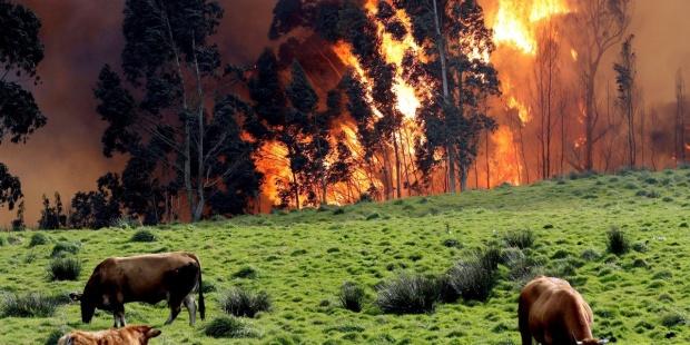 El viento eleva el número de incendios forestales en Asturias a 29