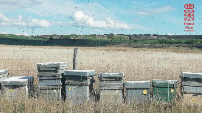 Investigado un apicultor por el ataque de sus abejas a cuatro mujeres