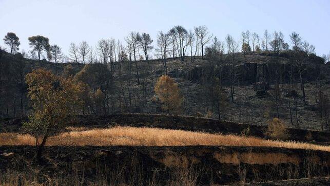 Estable el incendio de Tarragona y los de Toledo han quemado 3.600 hectáreas